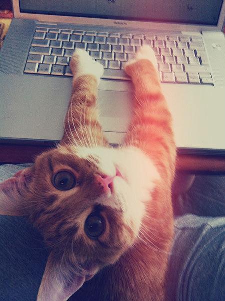 cute kitten on laptop