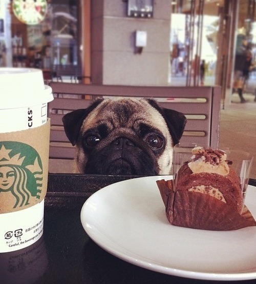 Travelling puppy in the Starbucks