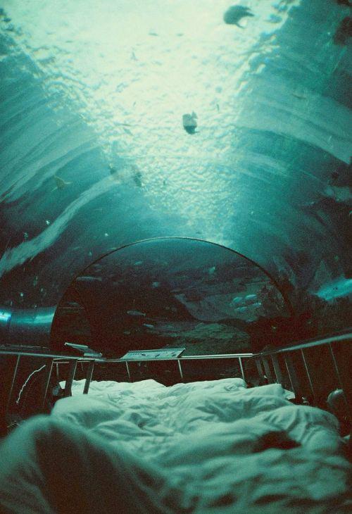 Aquarium sleepover