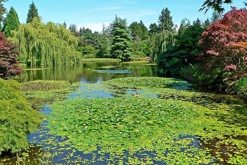 Beautiful lake and green trees at VanDusen Botanical Garden