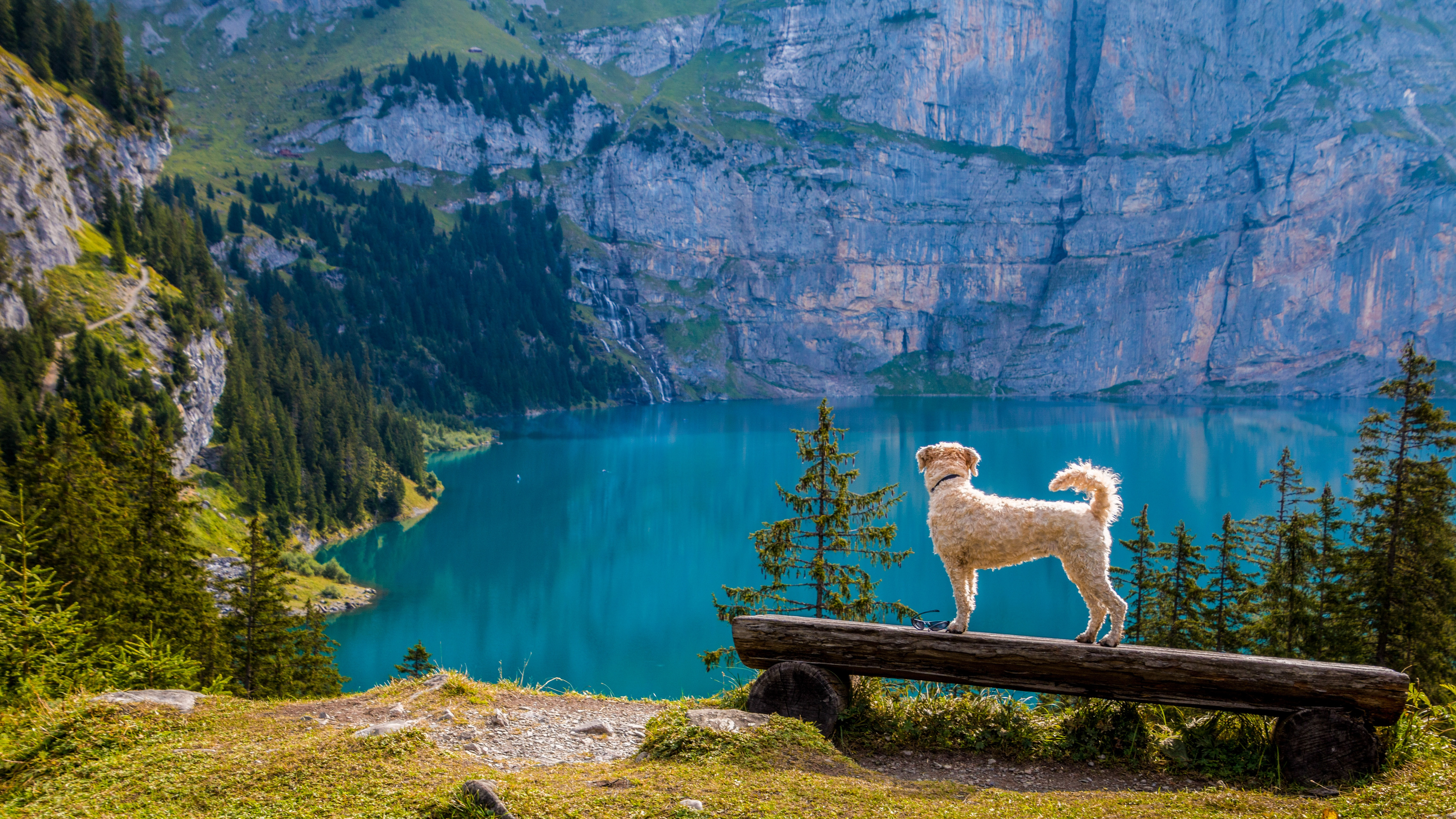 dog-friendly-hikes-vancouver
