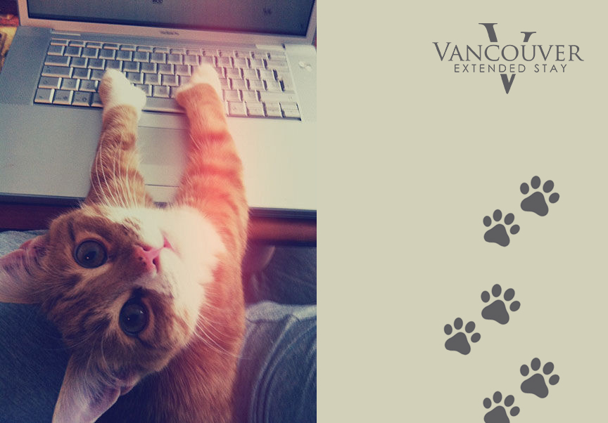 kitty cat typing on keyboard