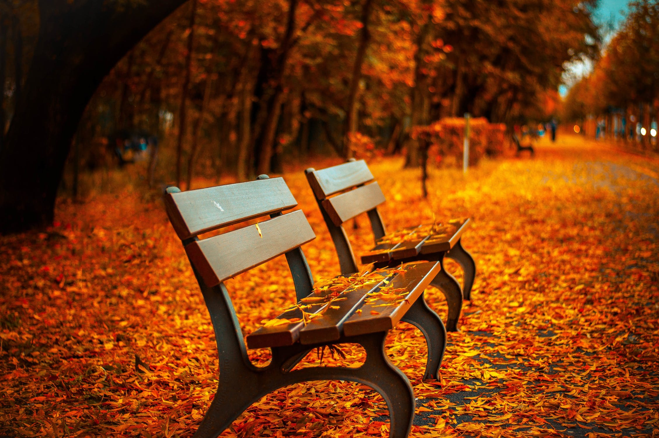 Vancouver Fall Park Bench